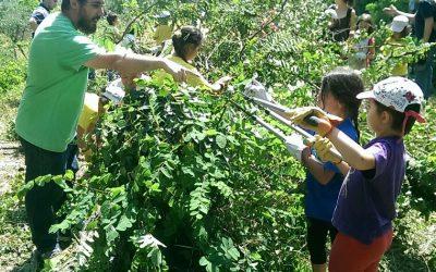 Aprenentatge Servei: activitat amb l'escola Font d'en Fargas