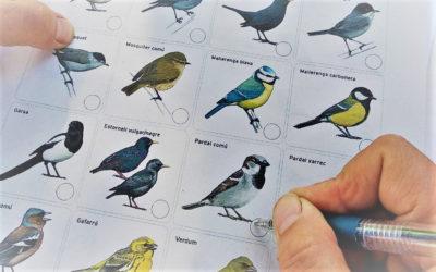 A Jardineria seguim ocells d'hivern amb SEO Birdlife