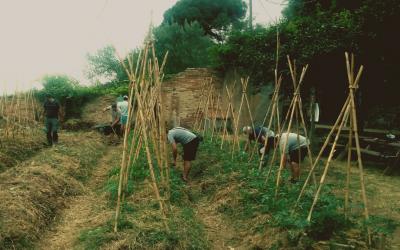 El proyecto Banc de Llavors siembra variedades locales recuperadas